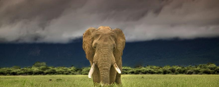 9.Elefante_africano-HI_301355naturepl.com-AndyRouse_WWF-Canon